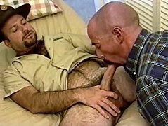 Two hairy bears love to suck each other\'s dicks and take it up their tight assholes
